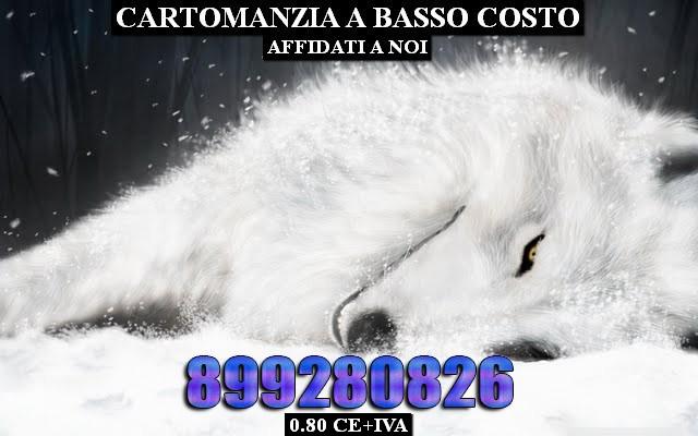 white-fantasy-wolf-6303